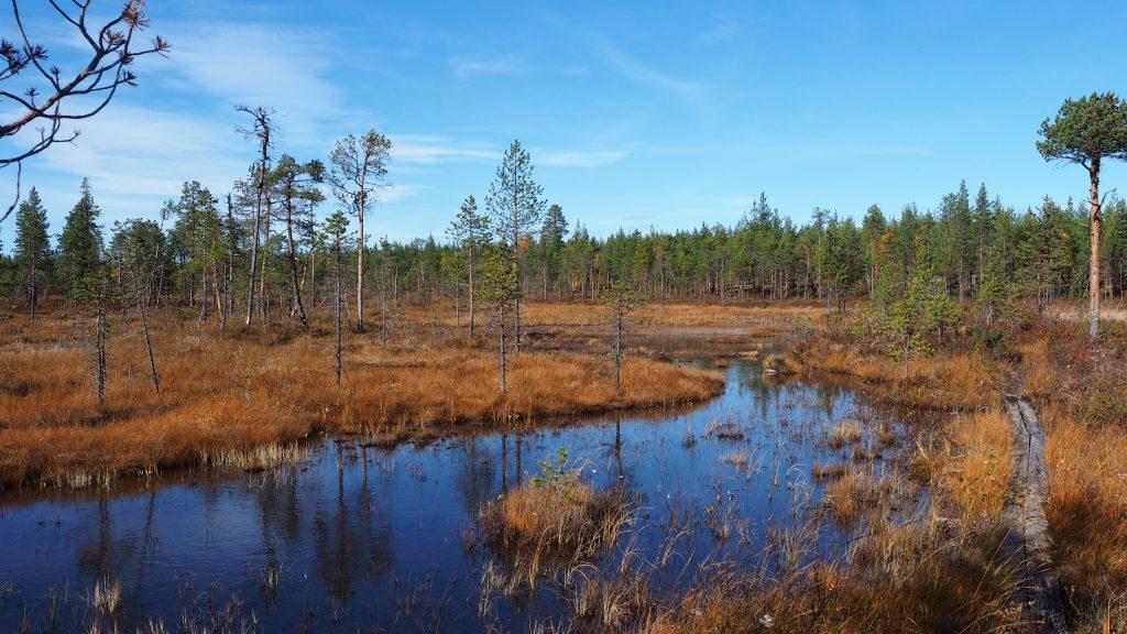 Wanderung am Pärlälven entlang zum Partafallet... inklusive Sumpfgebiet