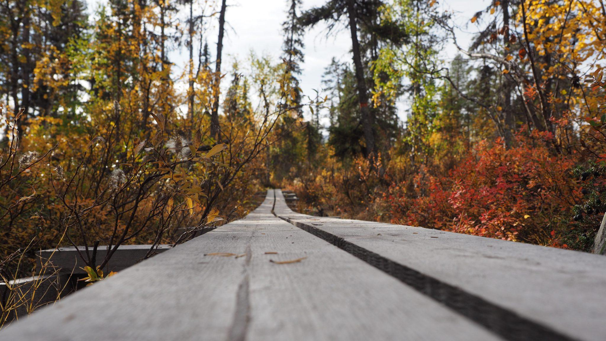 Weg im Muddus Nationalpark