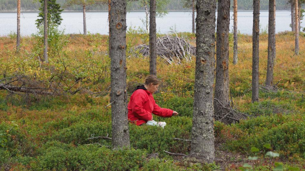 Annika beim Beeren sammeln