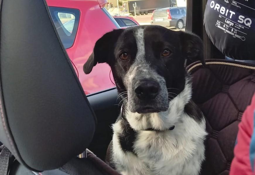 Urlaub mit Hund - Norr im Auto