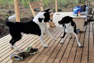 Keiko & Norr - tierische Freunde