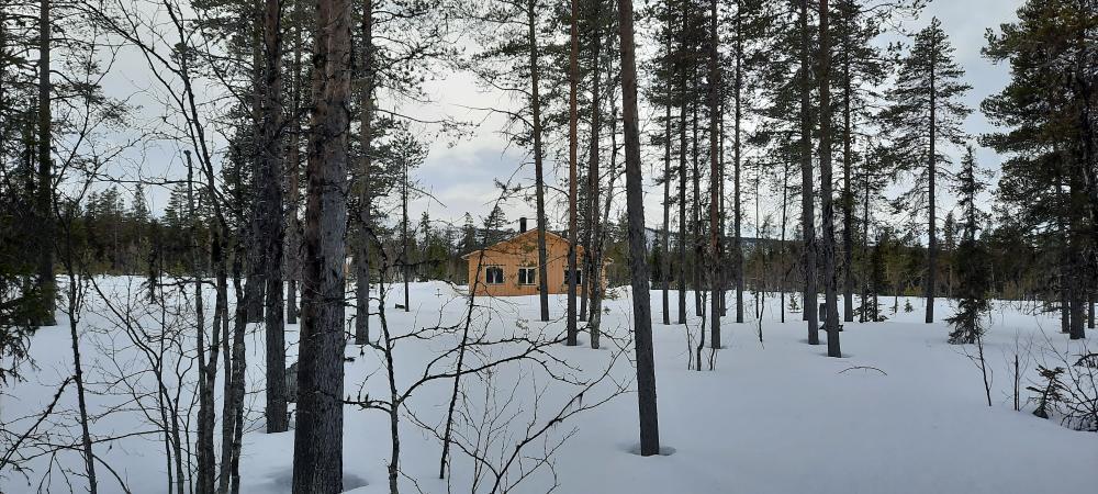 Dank für diese Foto durch den Wald auf das Häuschen